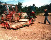 Binding old dairy.jpg